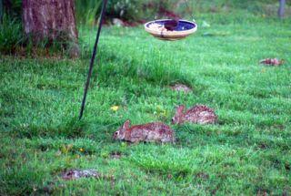 BunnybreakfastMay22
