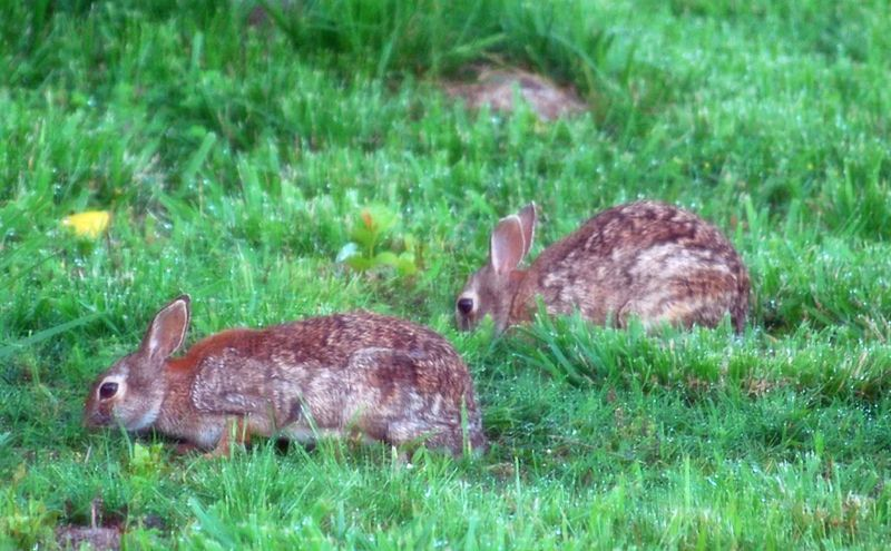 BunnybreakfastMay22a