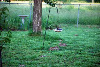BunnybreakfastMay22b
