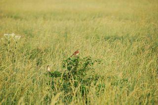 BirdpastureMay24a
