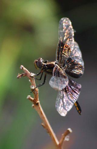 Dragonfly2Jun14h