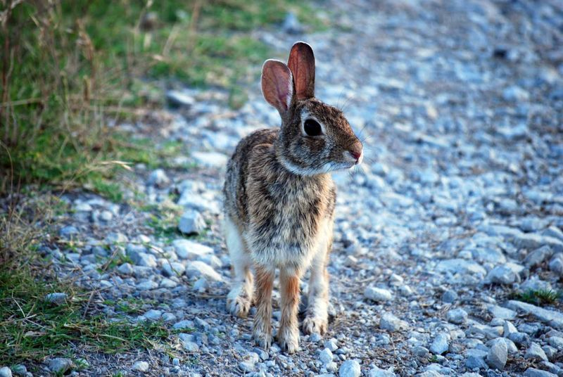 BunnycamebackJun13