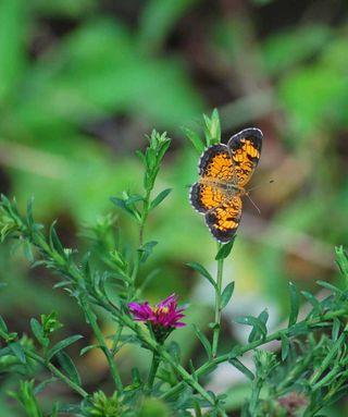 ButterflyJul12