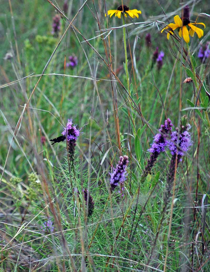 WildflowersJul22b