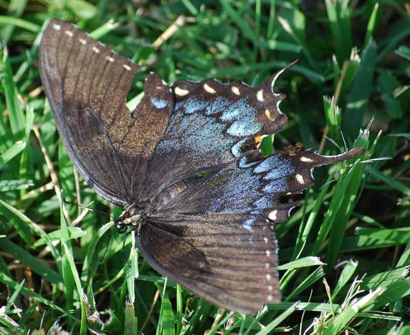 ButterflyJul25