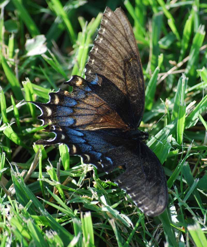 ButterflyJul25a