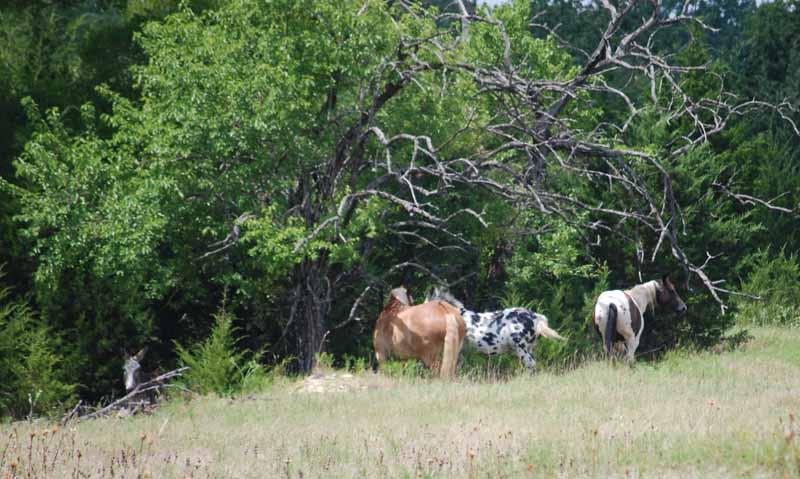 Horsestrees