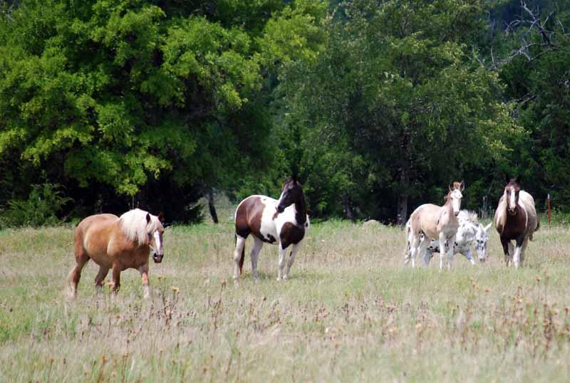 Horsesnosy