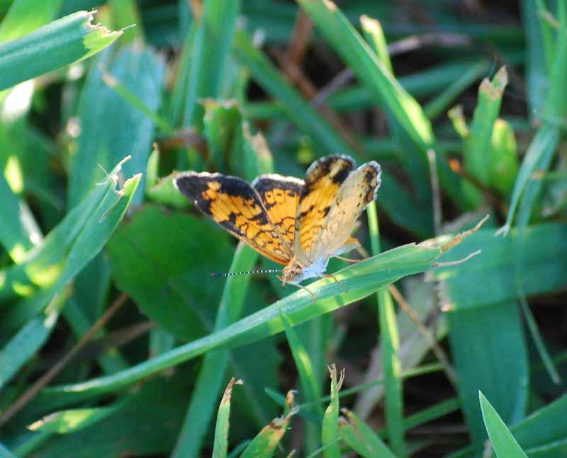ButterflyJul29a