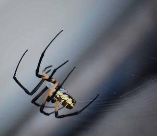 SpiderJul29b