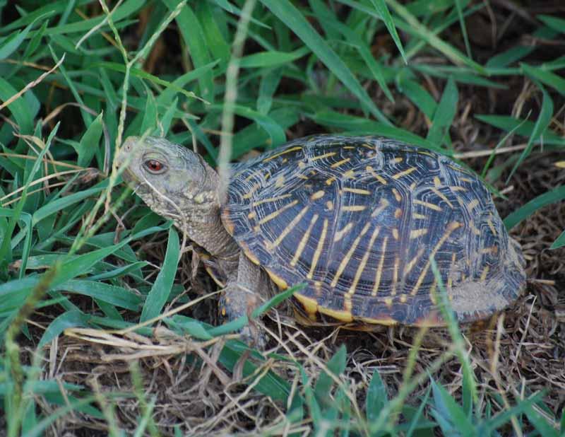 TortoiseAug23