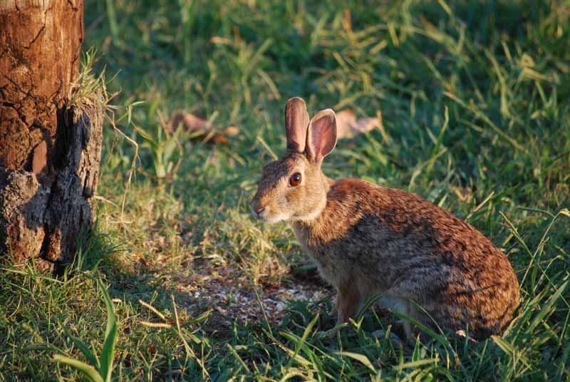 BunnyAug26