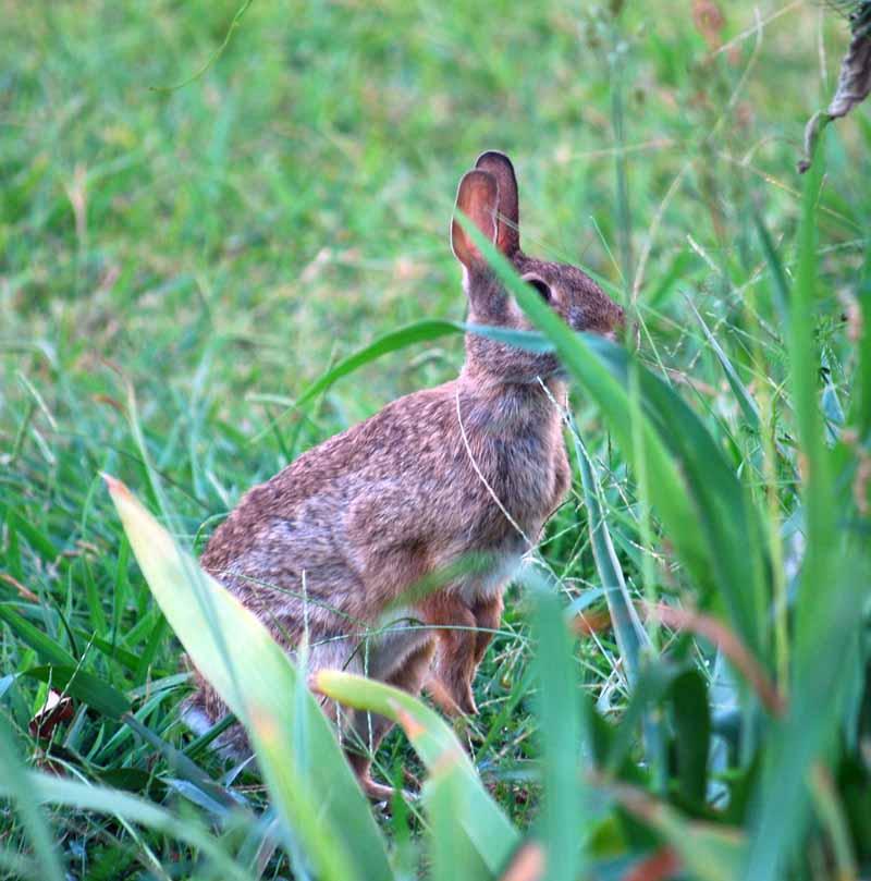 BunnyAug26e