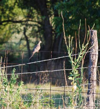 DovefenceAug26
