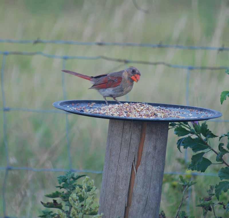 CardinalAug26