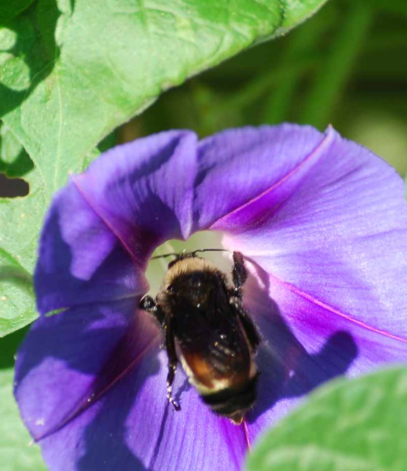 BeeSep4