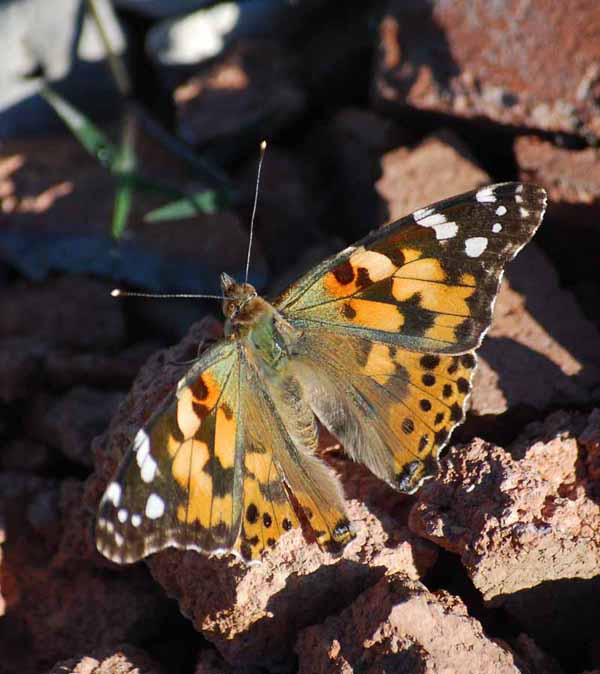ButterflySep4