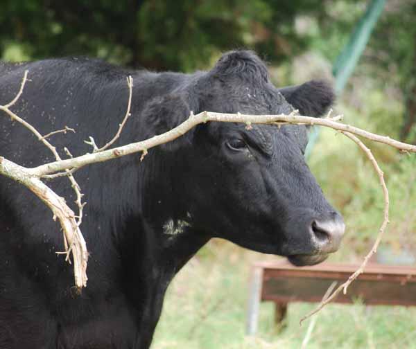 CowSep14