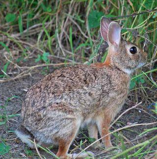 BunnySep14
