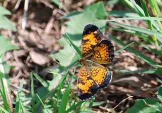 ButterflybestSep18