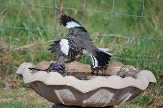 BirdbathSep21