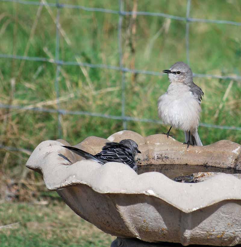 BirdbathSep21a