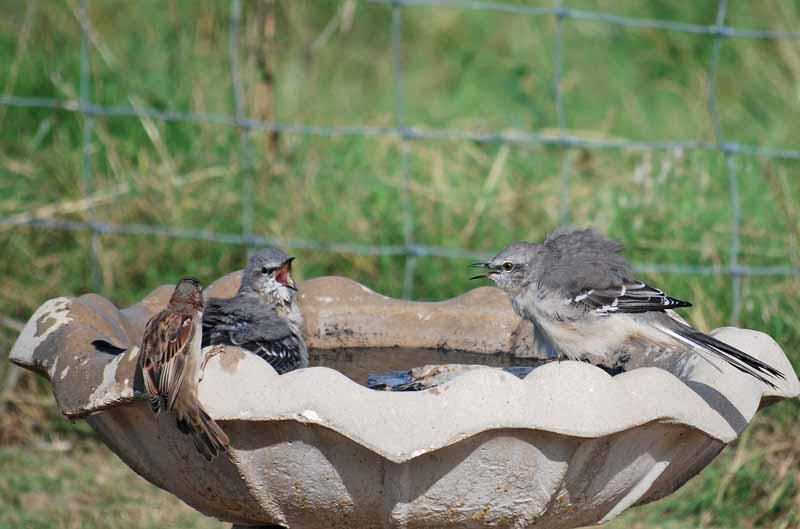BirdbathSep21d