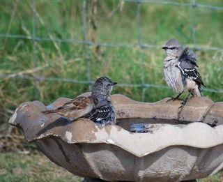 BirdbathSep21h