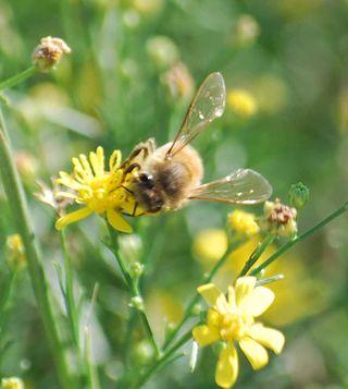 BeeSep27
