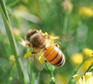 Beesep27a