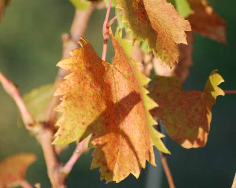Fall leavesOct5