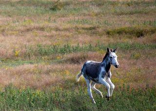 FoalOct21