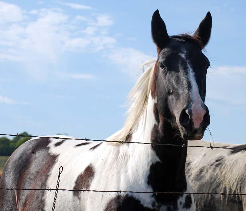 HorseOct21
