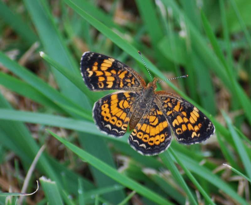 ButterflyOct24