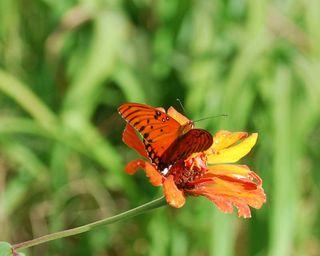 ButterflyOct31