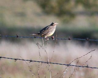 BirdOct30