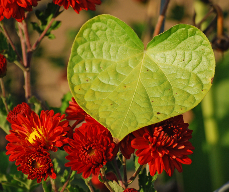 LeafmumsNov11