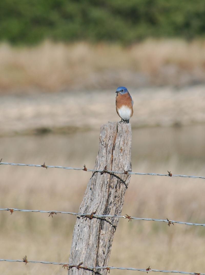 BluebirdNov13