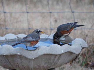 BirdsbathDec18a