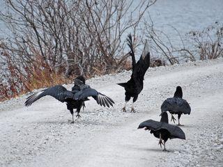 Vulturesroad2