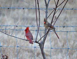 CardinalsJan16