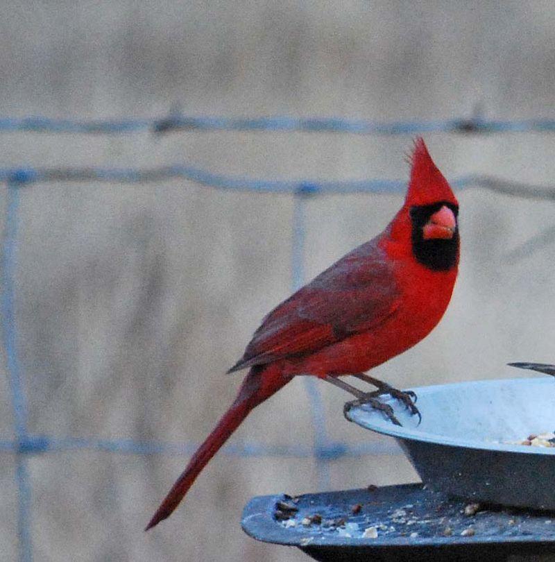 CardinalJan16
