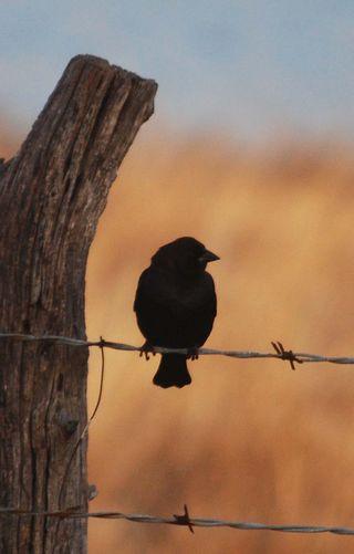 BirdshadowJan23