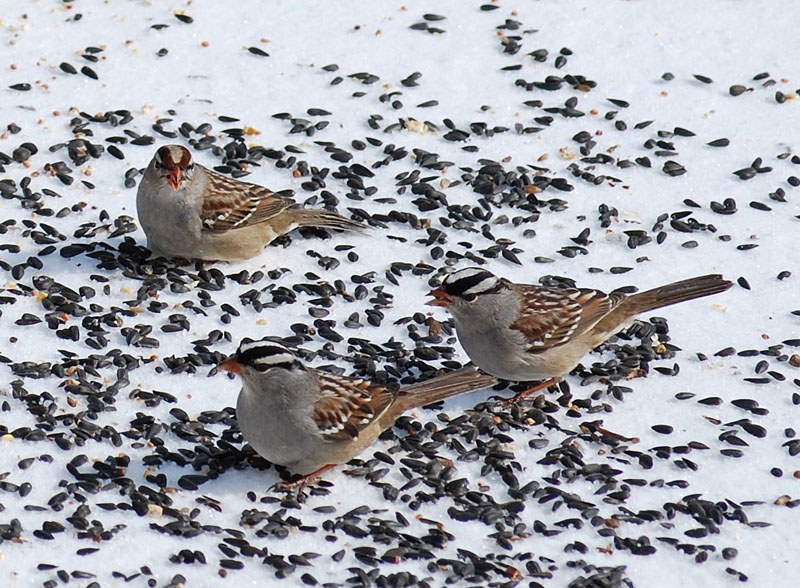 BirdsFeb1a