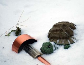 TurtleFeb9