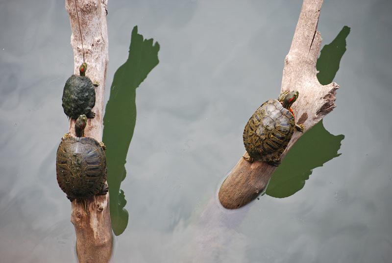 Turtleslog