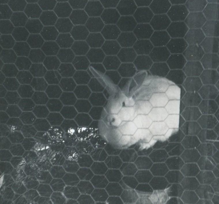 Rabbittwo