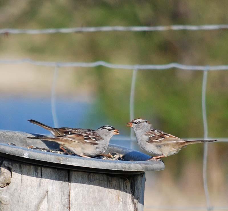 BirdsAp7