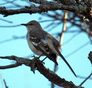 BirdDec21
