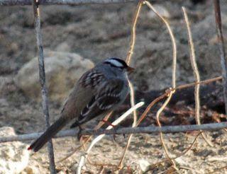 SparrowfenceDec21